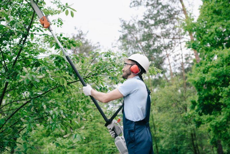 What is the need to enroll tree trimming service?